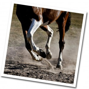 tout pour le bien-être du cheval aux écuries de propriétaire de Rossinante à Orléans