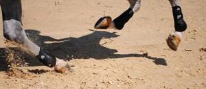 sol naturel limoneux du val de Loire aux Ecurie de Rossinante, idéal pour le pied du cheval